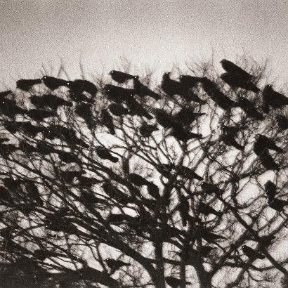 masahisa fukase raven series ماساهیسا فوکاسه کلاغ سیاهها