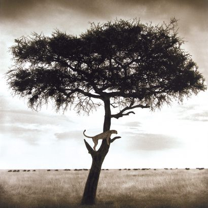 photo of a tree, nick brandt/ نیک برانت / عکاس حیات وحش/ عکس حیات وحش