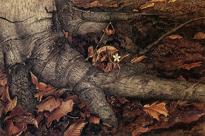 این نقاشی اثری از اندرو وایت نقاش رئالیست آمریکایی است با عنوان «زیبایی بهار»
